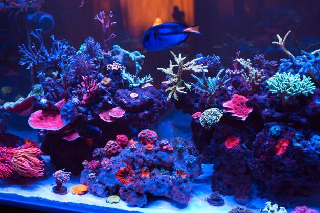 Des tables aquariums pour votre salon
